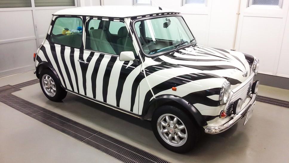 zebra (1 - 1)