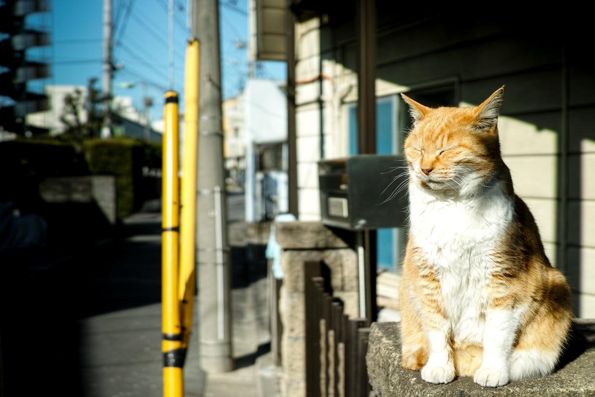 cat (1 - 1)