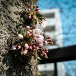 春が来た感じ