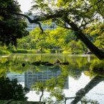 小石川後楽園行き